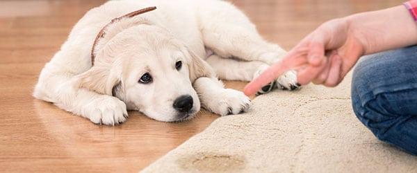 Hund Pissfleck